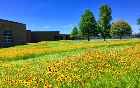 Prairie growth over the summer.